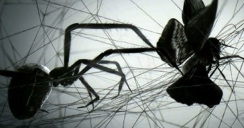 Loom short film about a spider's web