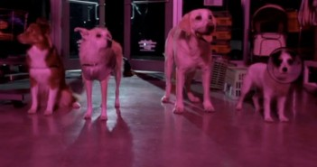 play dead zombie and dogs short film